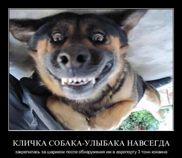 собака и кокаин