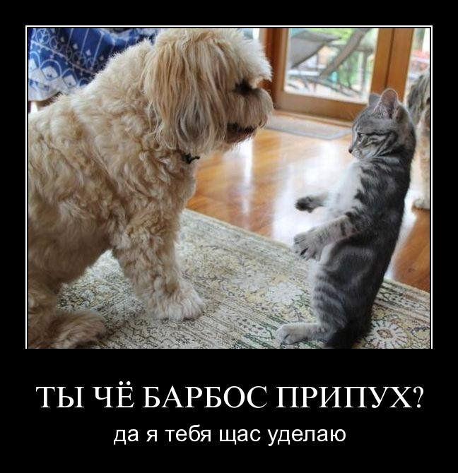 демотиваторы про котэ и собак