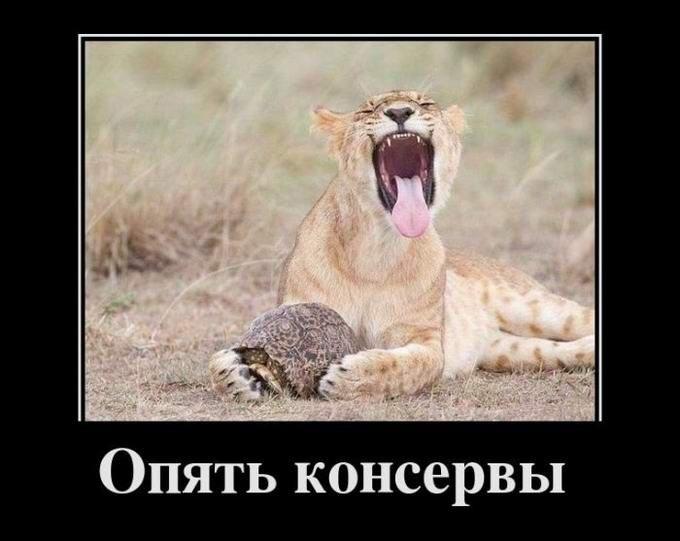 новейшие демотиваторы 2012
